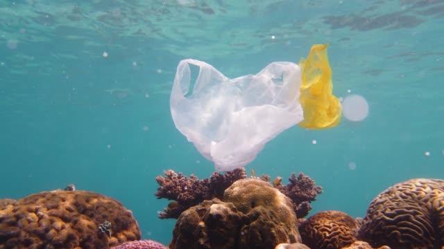 vídeos de stock, filmes e b-roll de recife coral bonito poluído com saco plástico - flutuando na água