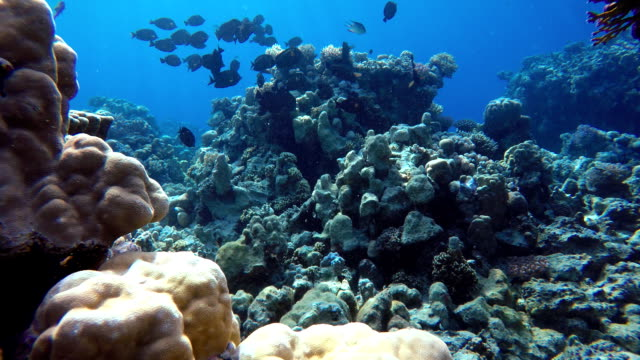 Beautiful coral reefs and tropical fish. Underwater life in the ocean. video