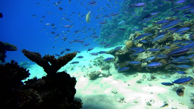 vackra koraller. undervattensliv i havet. tropiska fiskar. - indiska oceanen bildbanksvideor och videomaterial från bakom kulisserna