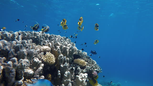 Beautiful corals. Underwater life in the ocean. Tropical fish. video