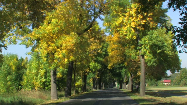 beautiful country road in Autumn video