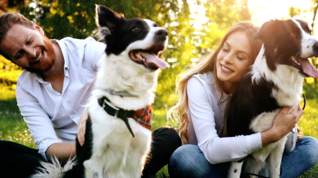 Beautiful couple cuddling and walking dogs outdoors video
