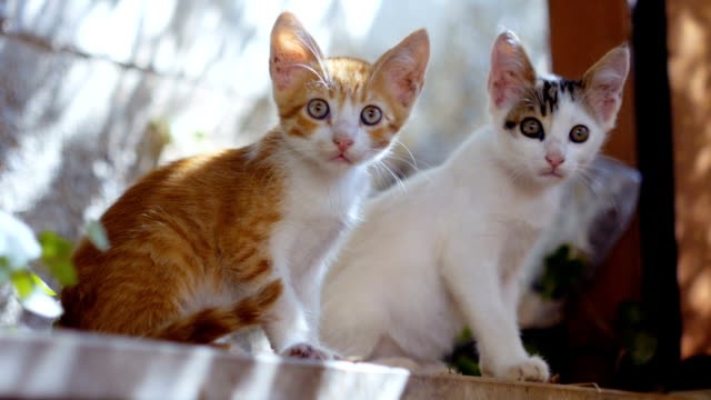 stockvideo's en b-roll-footage met mooie nieuwsgierig kittens - kitten