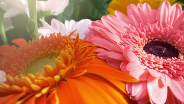 bellissimi fiori di gerbera margherita in magnifico bouquet di vacanze. la fotocamera si muove lungo i petali di fiori. fiori arancioni, rosa e bianchi con sfondo foglie di greeb.  4k, uhd - bouquet video stock e b–roll