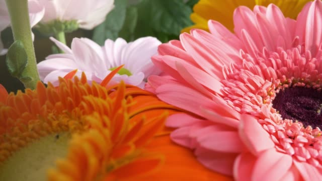Beautiful daisy gerbera flowers in magnificent holiday bouquet. Camera moves along the flower petals. Orange, pink and white flowers with greeb leaves background.  4K, UHD