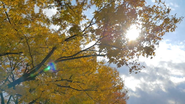 Beautiful day with blue sky and gentle fall breeze video