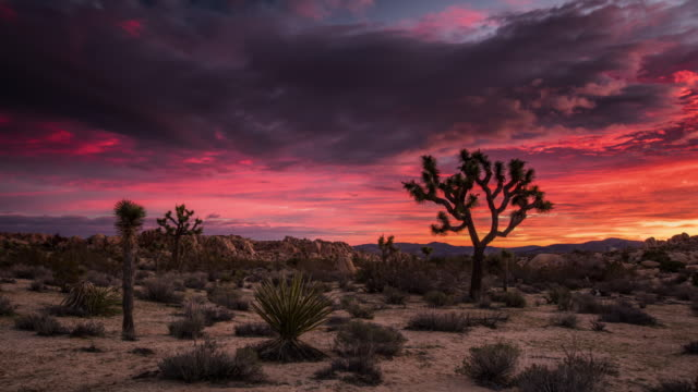 TIME LAPSE: Beautiful Desert sunrise at Joshua Tree National Park video