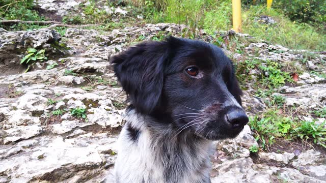 Beautiful dog mongrel funny turns his head and looks at the camera, funny view,