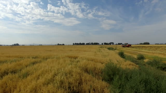beautiful drone shot into wheat field - erba medica video stock e b–roll