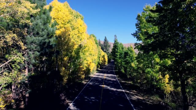Beautiful drone shot tracking along a lonesome road in the California mountains as the trees are changing colors. video
