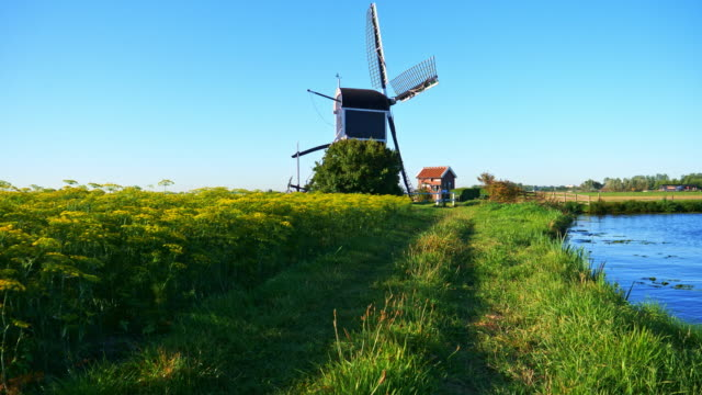 Beautiful dutch windmills and dill beautiful windmill landscape in a meadow of dill flowers in the Netherlands. gymbal shot. dutch architecture stock videos & royalty-free footage