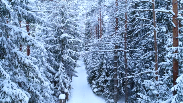 Beautiful fabulous winter forest landscape with a road near the fence in the snow.