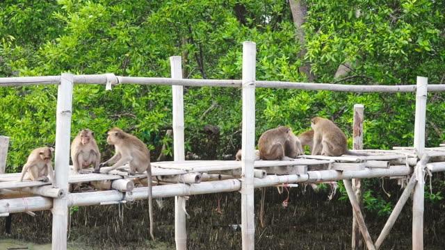 Schöne Familie mit jungen Affen Bräutigam und Spielen – Video