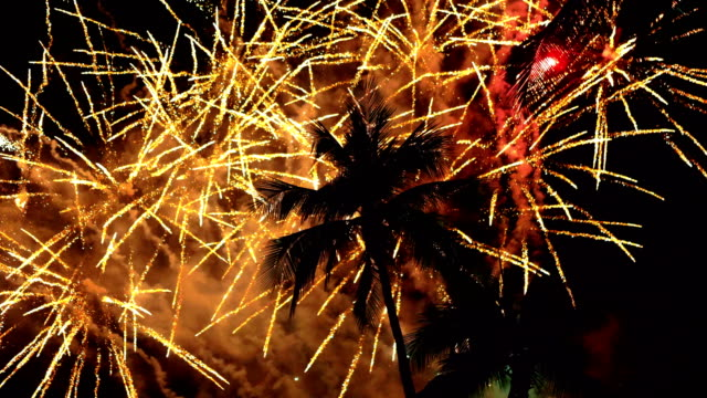 Beautiful Fireworks With Palm Trees in 4K Slow motion 60fps video