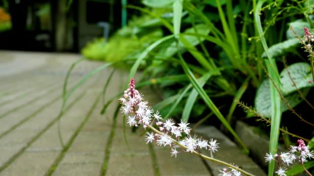 公園の道に沿って美しい花です。 - 花壇点の映像素材/bロール