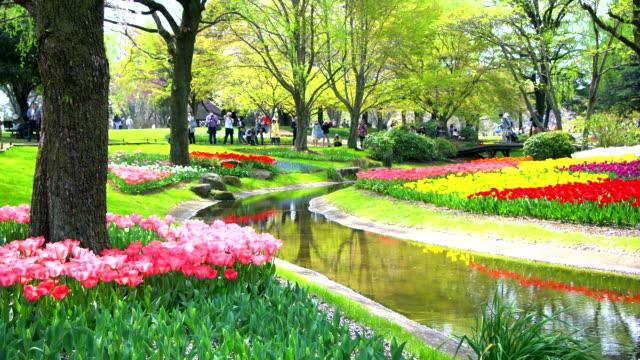 東京、日本の美しい花の庭園。 - 夏点の映像素材/bロール