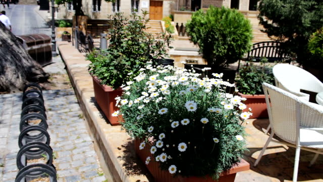 Beautiful flowerbed with flowering daisies on the streets of the capital city of a capital of Azerbaijan, Baku video