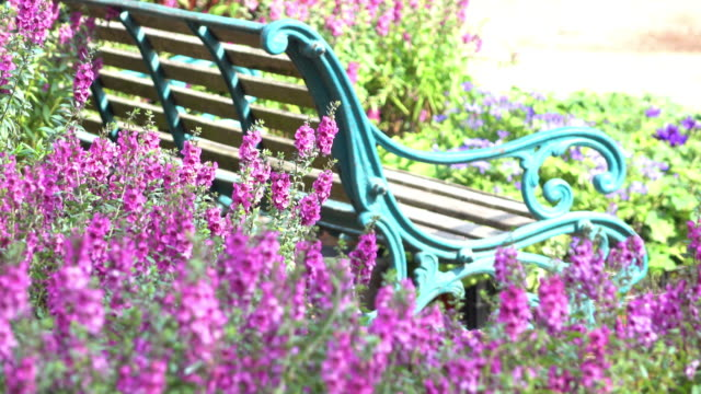 beautiful flowers garden with vintage bench beautiful pink flower blooming in garden with vintage bench flowerbed stock videos & royalty-free footage