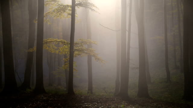 Beautiful forest in autumn video