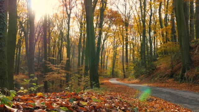 美麗的森林在秋天與陽光在早晨在一個美妙的秋天的心情 - four seasons 個影片檔及 b 捲影像
