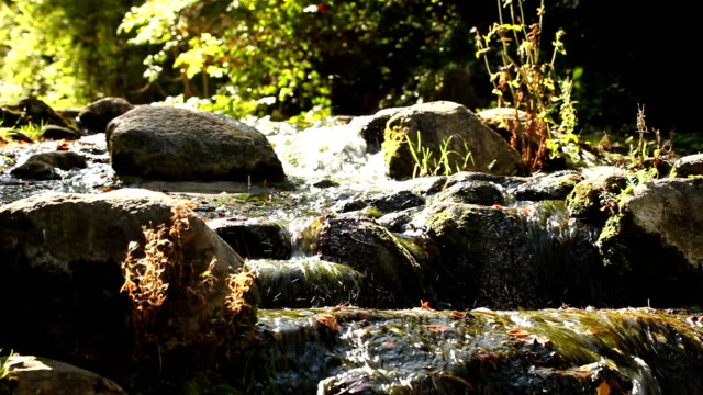 Beautiful forest river waterfall + Audio video