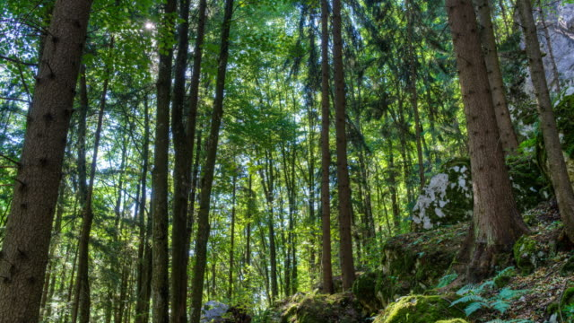 Beautiful Forest - Time Lapse HDR video
