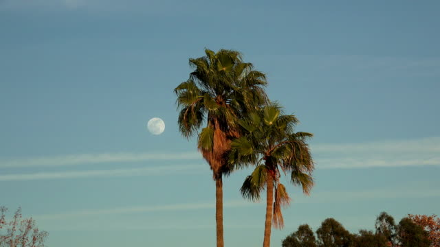 Beautiful full moon in the evening sky