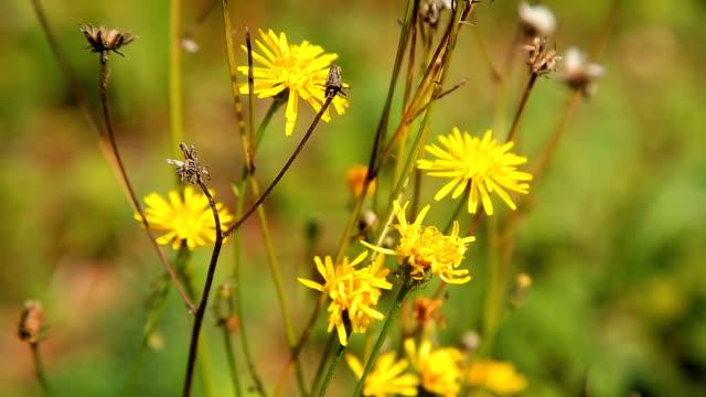 Beautiful garden flowers video