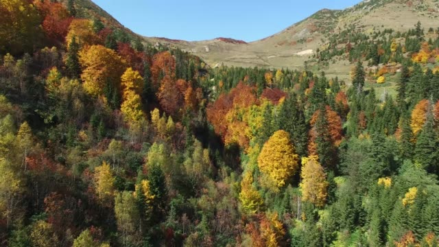 Beautiful general details views of Turkish goverment put under protection naturel beauty of Hatila Valley National Park at 1994 year in Artvin. Halita Valley National Park as if a garden from heaven place. This place collect nature all colors in itself. A