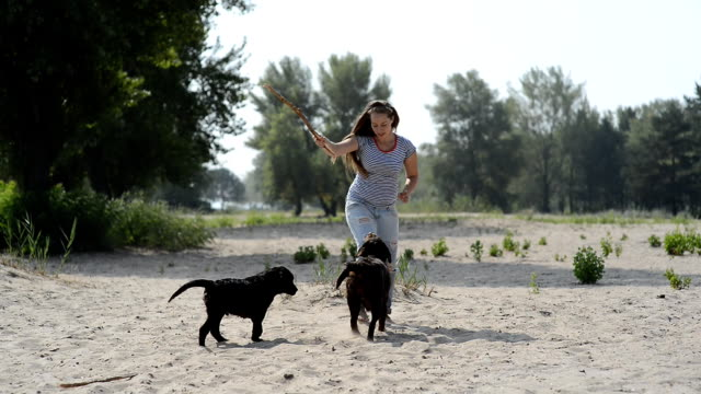 beautiful girl is playing with brown labradors video