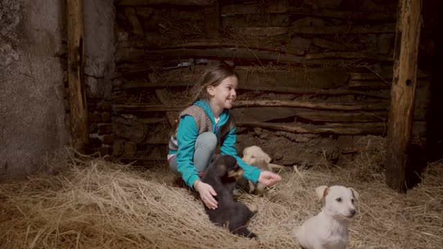 Beautiful Girl Petting Puppies in a Bed of Hay in a Stable on a Farm
