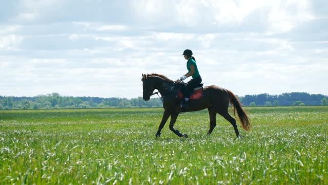 美しい少女の田園地帯を馬の乗馬 ビデオ