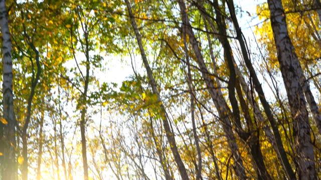 stockvideo's en b-roll-footage met mooie gouden herfst in het bos. stralen van de zon krijgen op de lens van de lens en geven een glans. een romantische tijd in het park fullhd - blue sky