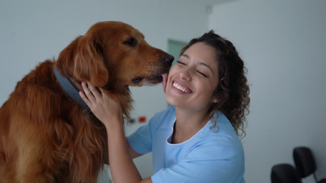 beautiful golden retriever licking female veterinarian's cheek during consult while she smiles - leccare video stock e b–roll