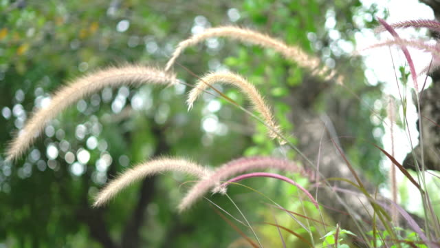 beautiful grass flower swaying in the wind - colore saturo video stock e b–roll
