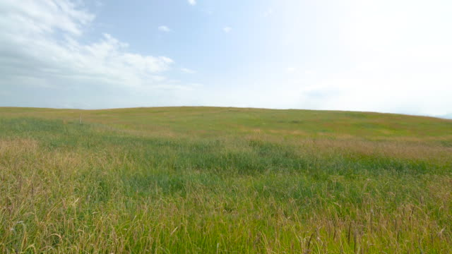 vídeos de stock e filmes b-roll de beautiful grassland in xinjiang, china - oscilar