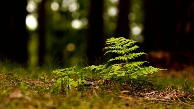 Beautiful green fern in the forest after rain video