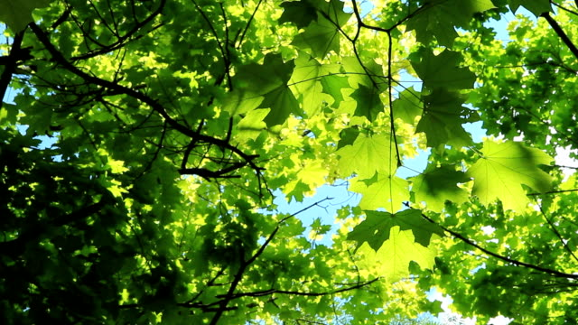Beautiful green foliage video
