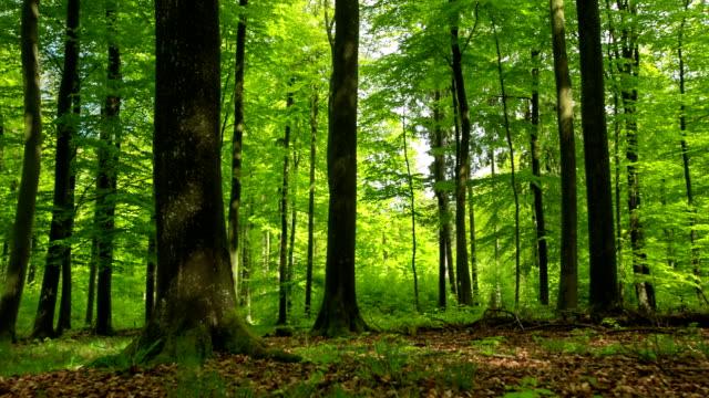 schöne grünen forest - baumgruppe stock-videos und b-roll-filmmaterial
