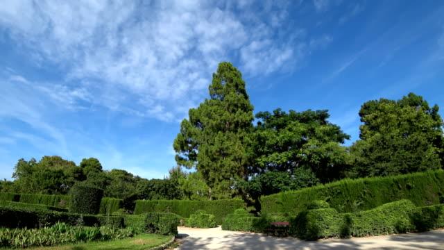 Beautiful green garden video