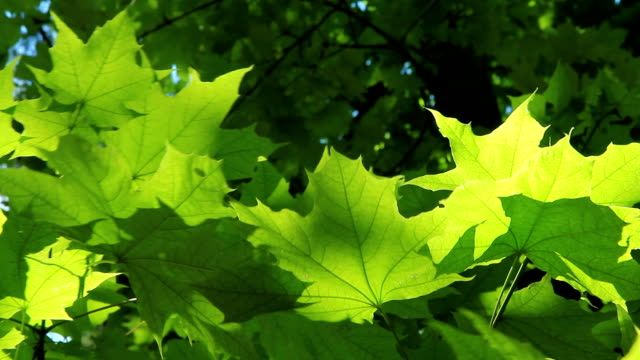 Beautiful green leaves video
