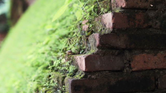 Beautiful green moss grow on brick wall. Nature blending with architecture video