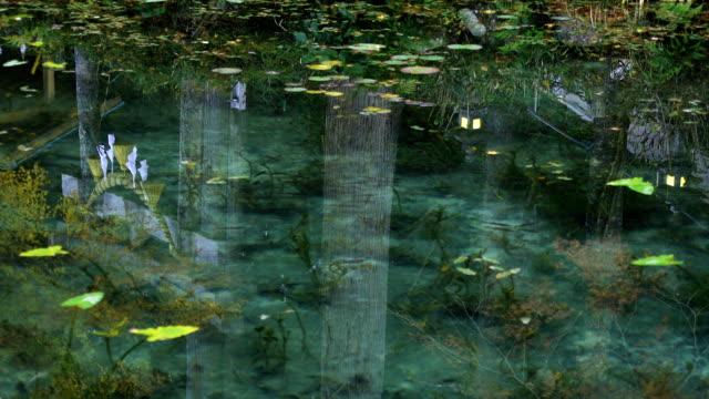 Beautiful green pond in Gifu Japan autumn