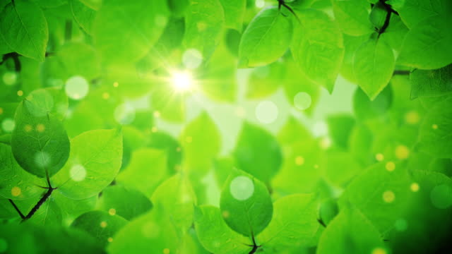 beautiful green tree leaves reveals the light of the sun video