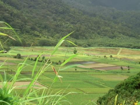beautiful green valley, push through grass - 10 saniyeden daha kısa stok videoları ve detay görüntü çekimi