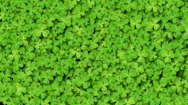 Beautiful Growing Clover Green Leaves Covering the Screen. Growing Grass Animation with Alpha Matte. Useful for Transitions. Spring Nature and New Life Concept.