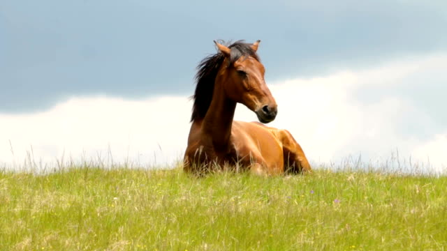 beautiful horse lying in the green grass - equino video stock e b–roll
