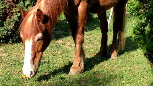 beautiful horse on the green grass pasture - grzywa filmów i materiałów b-roll