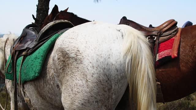 Beautiful horses in summer nature landscape