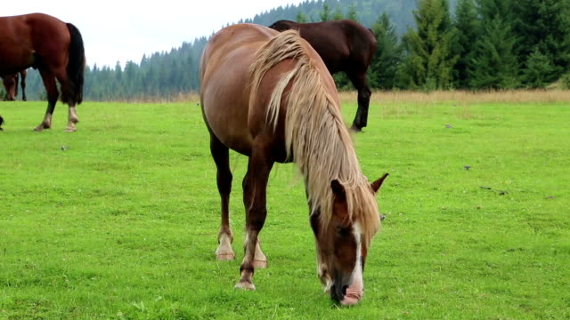 Beautiful horses on green pasture Beautiful horses on the green pasture videos of dogs mating stock videos & royalty-free footage
